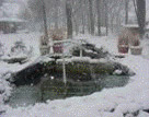 Getting your pond winterized